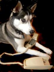 Nico On the Phone
