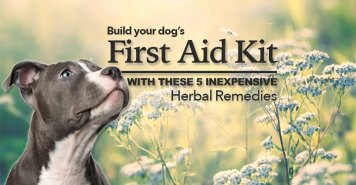 Herbal First Aid by Dogs Naturally Magazine (Dana Scott)
