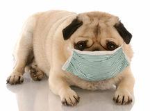 sick-dog-10980120