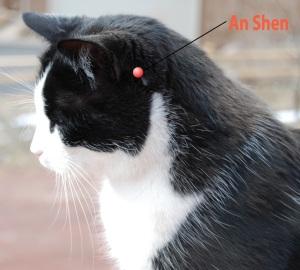 An Shen Cat