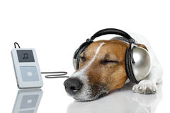 dog-listen-to-music-23638440