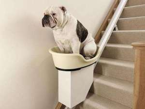 bulldog-on-lift-photo-u2