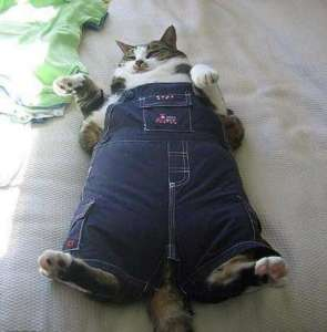 cat-in-overalls-photo-u2