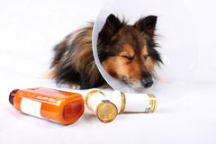 dog with med bottles
