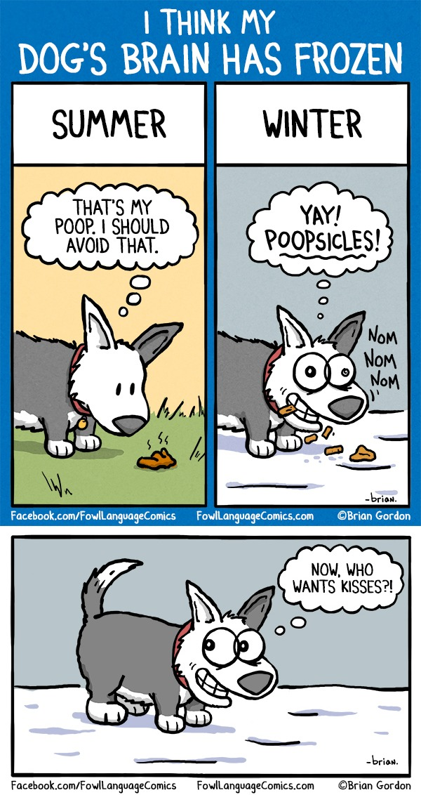 Best Dog Poop Eating Deterrent