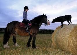 horse an dog