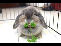 Bunny with greens