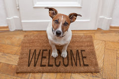 dog-welcome-home-26629661