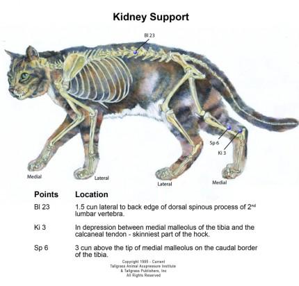 Feline Kidney Support