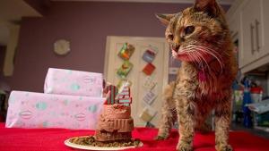 Poppy-oldest-cat-main_tcm25-20149