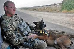 service dog for army