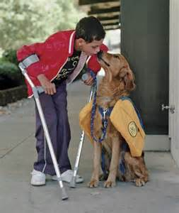 service dog with cripple
