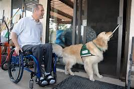 service dog with wheel chair