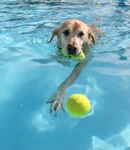 dog swiming