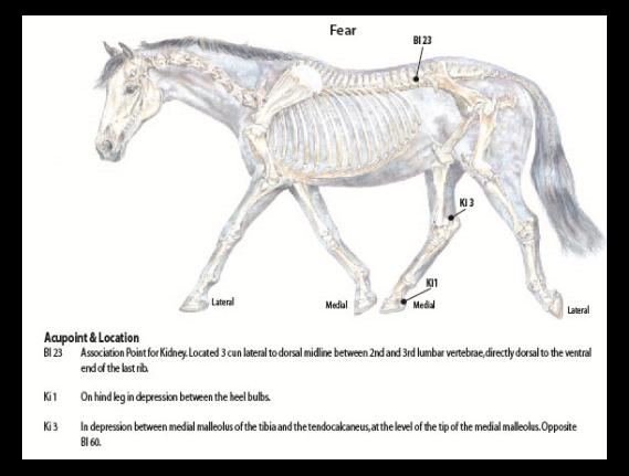 Equine Fear accupressure Chart.jpe