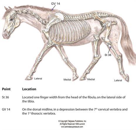 Moxa Immune equine.jpe