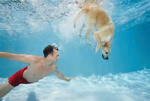swim with dog