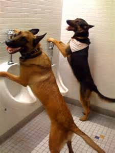 dog-with-urinals