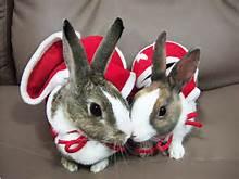 bunny-claus