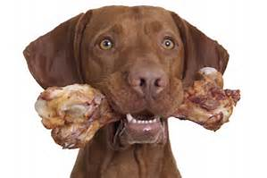 dog-with-bone-2