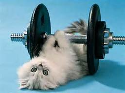 cat-weights