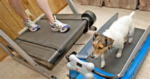 dog-tread-mill