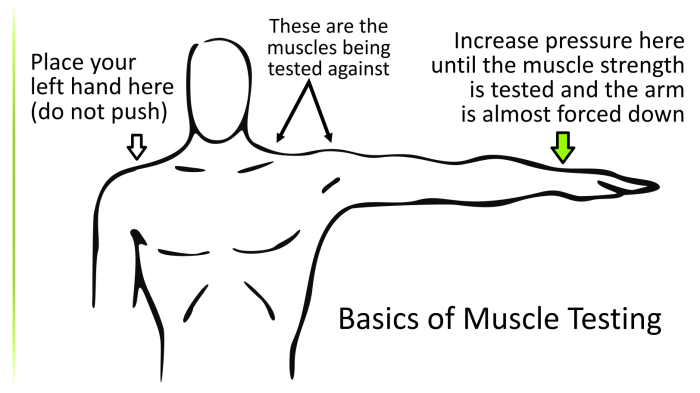 muscle-test3