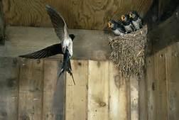 bird-nest-3