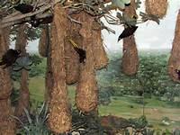 bird-nest-4