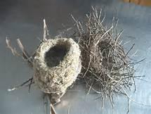 bird-nests-2