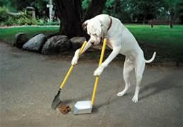 dog-scooping-poop